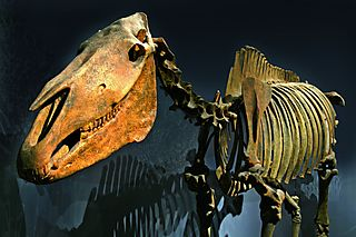 Skelett des Mosbach Pferdes (c) Naturhistorisches Museum Mai